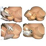 DMZH Parto Ostetricia Simulator, Ostetriche Formazione Modello Normale Anomalo Posizione Fetale Consegna per Medico Ginecologia Insegnamento Anatomico Modello