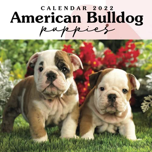American Bulldog Puppies 2022 Calendar: Great 12-month Large Grid Calendar 8.5 x 8.5 for scheduling, planning, and note!!!
