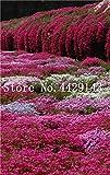 Generic Fresh 100 pcs semillas de flores ROCK CRESS para plantar Mixed 2