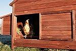 Zooprimus Poulailler en bois pour jardin extérieure cage canard équipé 2 nichoirs 188 x 87 x 113 cm -- 129 Ferme de terrain #3