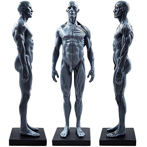 27,9cm Stecker menschlichen Körper, Muskel Anatomisches Modell CG Gemälde Skulptur Referenz Werkzeuge (PU)