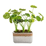 Ferrisland Cement Potted Artificial Plant Hydrocotyle Grass, Small Potted Artificial Hydrocotyle Vulgaris Plant Indoor, Tabletop Fake Plant Simulation Plant Home Garden Decorations
