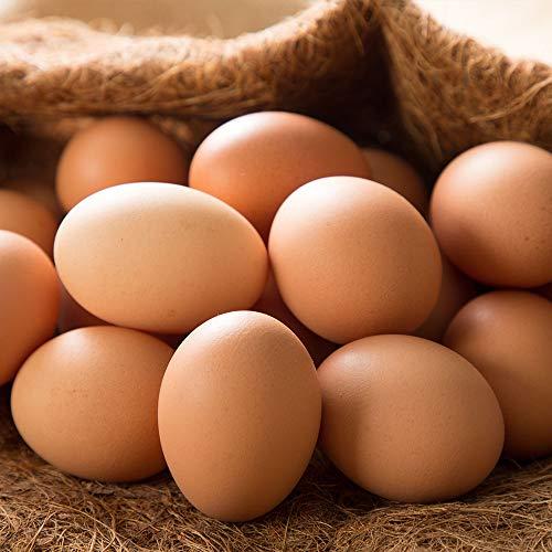 平飼い有精卵 75個 (北海道 Farm Agricola) 産地直送 ファームアグリコラ たまご ふるさと21