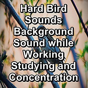 Hard Bird Sounds Background Sound while Working Studying and Concentration