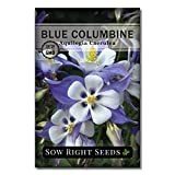 Sow Right Seeds - Blue Columbine Flower Seeds for Planting, Beautiful Flowers to Plant in Your Garden; Non-GMO Heirloom Seeds; Wonderful Gardening Gifts (1)