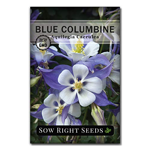 Sow Right Seeds - Blue Columbine Flower Seeds for Planting, Beautiful Flowers to...