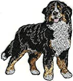Embroidered Iron On Sew On Patch Body Bernese Mountain Dog Breed Great Quality Applique, 2 1/4' x 2 5/8'