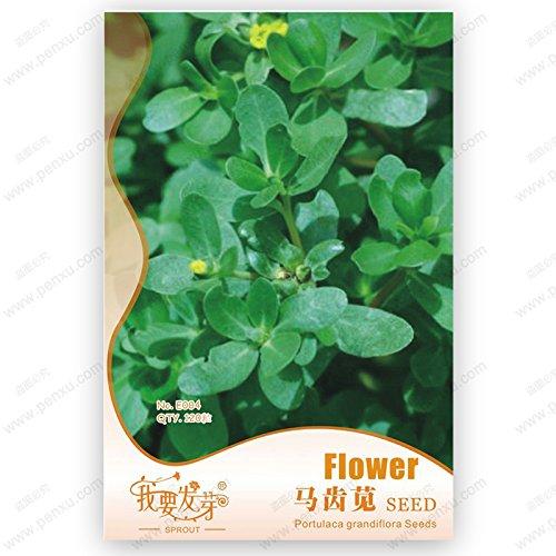 Vente HOT 30 graines Graines Potted insectivores plantes clip Dionaea Muscipula géant Venus Flytrap Seeds