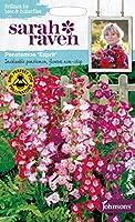 【輸入種子】 Johnsons Seeds Sarah Raven Brilliant for Bees & Butterflies Penstemon Esprit サラ・レイブン・ビー&バタフライ ペンステモン エスプリ ジョンソンズシード