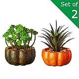 VILIVIT Sets of 2 Artificial Succulent Plants in Pumpkin Planter - Faux Succulents Green Ecalyptus Cactus Cacti Bonsai Plant Sets for Tabletop Shelf Decor