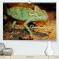 Chamaeleons (Premium, hochwertiger DIN A2 Wandkalender 2022, Kunstdruck in Hochglanz): Chamaeleons - einfach Wunderbar (Monatskalender, 14 Seiten )