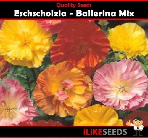 Eschscholzia bailarina Mix 100 semillas mínima de las plantas del jardín de flores de colores.
