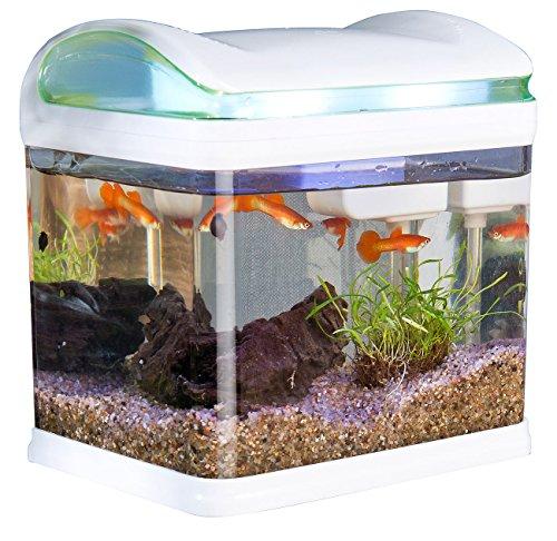 Sweetypet Aquarium: Transport-Fischbecken mit Filter, LED-Beleuchtung und USB, 3,3 Liter (USB Aquarium)