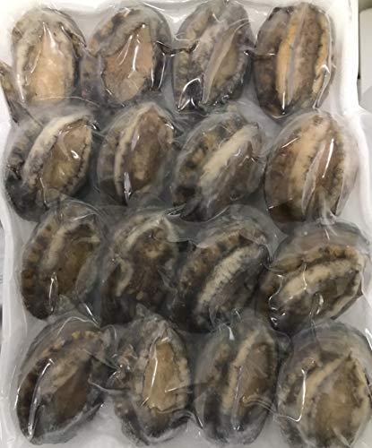 あわび 殻付き 1kg(個61?70g) 冷凍 加熱用 業務用 鮑