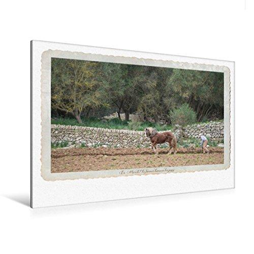 Premium textiel canvas 120 cm x 80 cm liggend Een motief uit de kalender Emotional Moments - A Taste of Country Life op Mallorca./UK-versie | canvas, canvas druk (CALVENDO Nature);CALVENDO Natuur