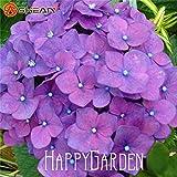 honic 20 pcs viola ortensia giardino, balcone bonsai fort viburnum hydrangea macrophylla bonsai pianta del fiore flores, sfvnl0