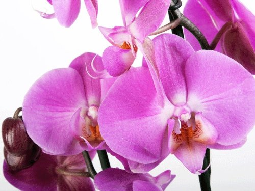 FOTOBEHANG digitale druk foto bloemen orchideeën afbeelding behang FT-0049