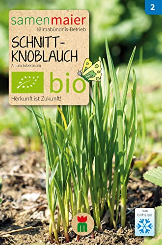BIO Schnitt-Knoblauch (Allium tuberosum)