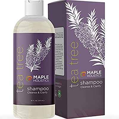 Tea Tree Oil Shampoo for Men Women Teens with Itchy Dandruff and Dry Skin Sulfate Free Natural Anti Dandruff Shampoo Safe for Color Treated Hair with Rosemary Lavender Jojoba and Argan Oils