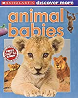 Animal Babies (Scholastic Discover More)