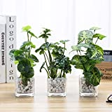 MyGift Artificial Greenery Plants in Clear Glass Vase with Decorative White Stones, Set of 3