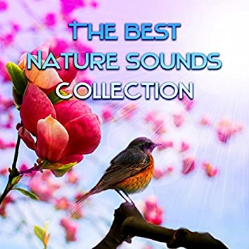 The Best Nature Sounds Collection – Ocean Sounds, Birds for Sleep and Relaxation, Sonidos de la Naturaleza, Sons de la Nature, Water Sounds, Guitar & Piano Music