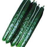 国華園 種 早得野菜たね キュウリ F1味まっしぐら 1袋(2ml) /メール便配送