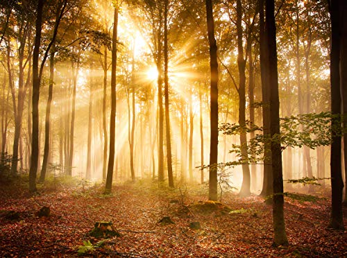 wandmotiv24 Fototapete Wald am Morgen Größe: 350 x 260 cm Wandbild, Motivtapete, Vlietapete KTk391