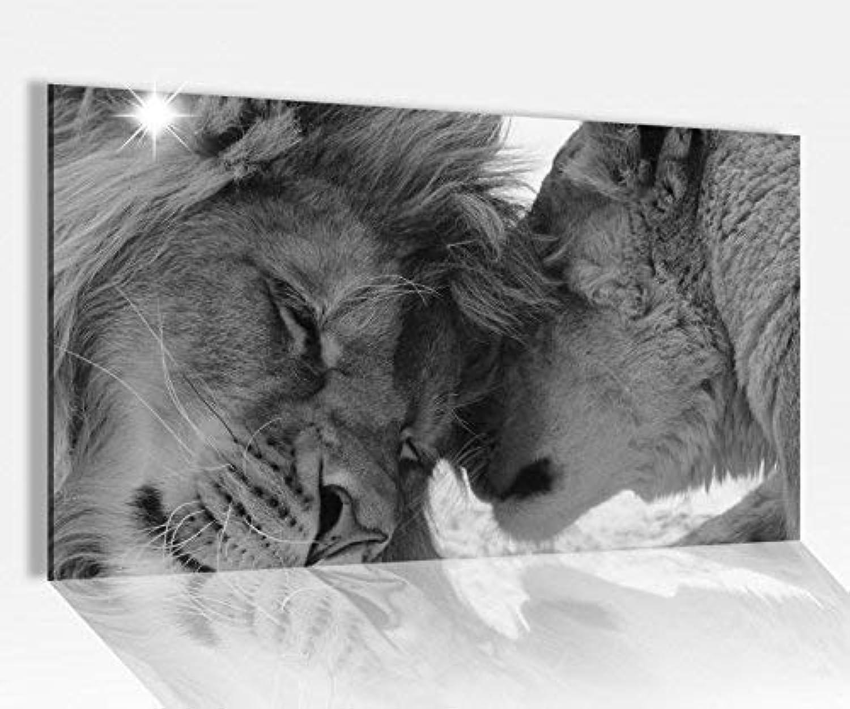Acrylglasbilder 80x50cm schwarz schwarz schwarz weiss Löwe Löwin Tiere Paar Liebe Hochzeit Acryl Acrylbild Acrylglas Wand Bild 148100, Acrylglas Größe4 80cmx50cm B074YL867C c18a9c