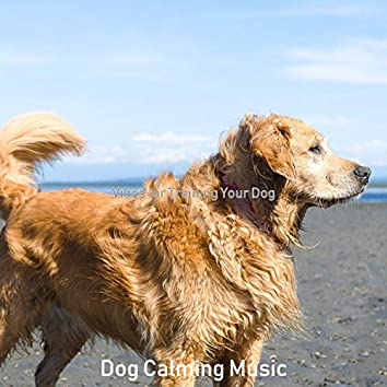 Vibes for Training Your Dog