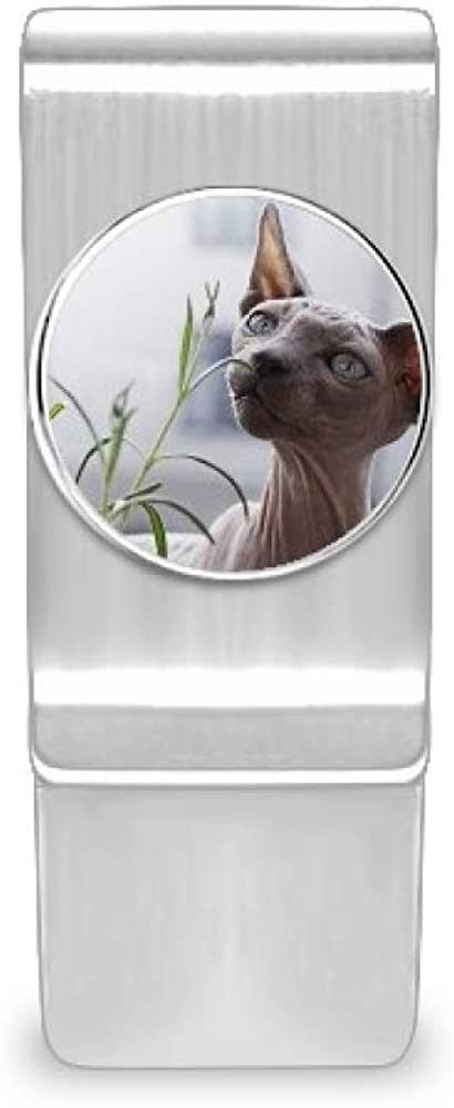 Animal Gray Thin Cat Charlotte Mall Photograph discount Money Card Hold Cash Clip Wallet