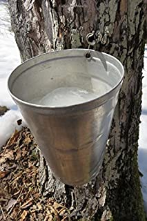 Silver Bucket on a Maple Tree to Collect Sap for Maple Syrup Journal: 150 Page Lined Notebook/Diary