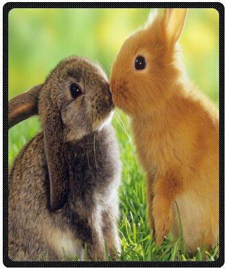 "A pair of cute fluffy bunny Rabbits Design Throw Blanket Fleece 50"" x 60"" (Medium)"