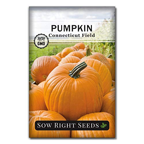 Sow Right Seeds - Connecticut Field Pumpkin Seed for Planting - Non-GMO Heirloom...