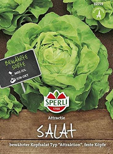 82759 Sperli Premium Kopfsalat Samen Attraktion | Zart | Große Köpfe | Kopfsalat Saatgut | Salat Saatgut | Schossfest
