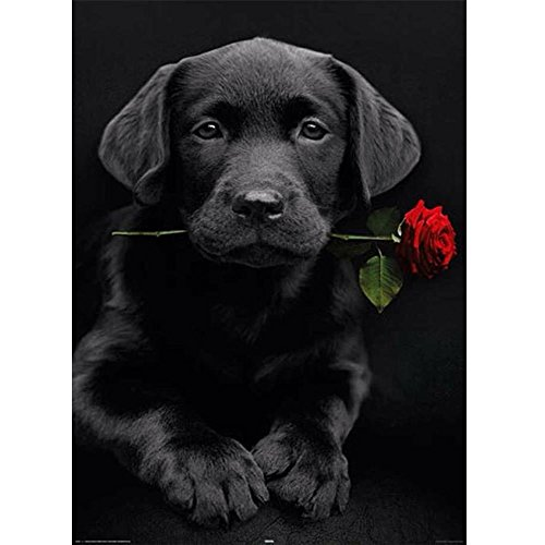 MXJSUA DIY 5D Diamond Painting Kits Round Drill Crystal Rhinestone Embroidery Pictures Arts Craft for Home Wall Decor Gift Black Dog Rose 30x40cm