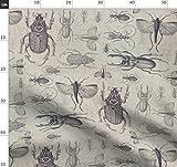 Vintage, braun, retro, beige, Käfer, Insekt, Wissenschaft,