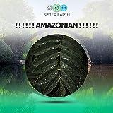 Amazonian Ground