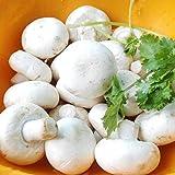 KINGDUO Egrow 100Pcs/Bolsa Semillas De Setas Blancas Nuevas Semillas De Verduras Comestibles Y Saludables Bonsai Plant Seeds