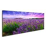 islandburner Bild Bilder auf Leinwand Lavendel Feld Büsche