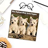 2021 West Highland White Terrier Puppies Wall Calendar by Bright Day, 12 x 12 Inch, Cute Dog