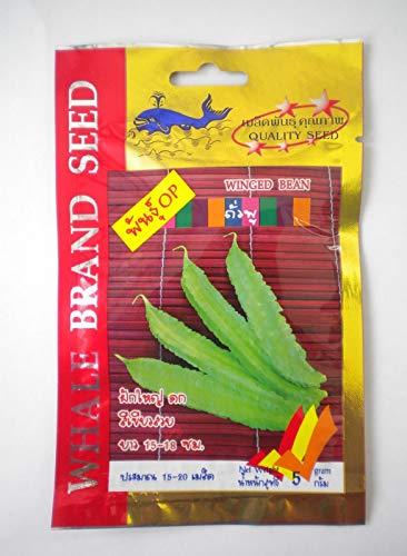 PLAT FIRM GERMINATIONSAMEN: Satz von chinesischem Grünkohl-Samen und Winged Bean-Samen (Tour-Plu Bean)