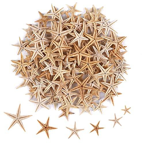 PPCLION 100 Pcs Small Tiny Starfish for Crafts Sea Shell Beach 0.4'-1'