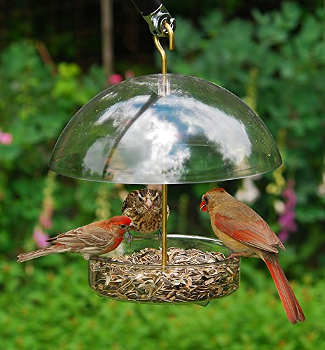Droll Yankees Bird Feeder, Platform Cardinal Bird Feeders with Roof Cover, 10 Inch Diameter, Clear, X-1