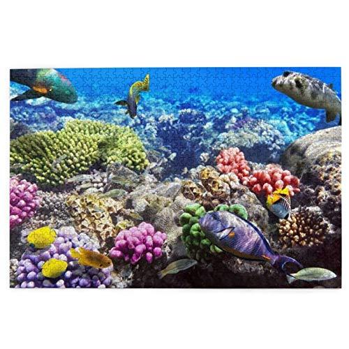 AMIGGOO Jigsaw Puzzles 1000 Stück,Lot Hurghada Riff Korallenfisch Rot Ägypten Tiere Tierwelt Natur Ozean Leben Aquarium Hawaii Unter Wasser,Family Large Puzzle Game Artwork für Erwachsene Teens Kids