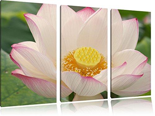 zarte rosafarbene Bachblüte 3-Teiler Leinwandbild 120x80 Bild auf Leinwand, XXL riesige Bilder fertig gerahmt mit Keilrahmen, Kunstdruck auf Wandbild mit Rahmen, gänstiger als Gemälde oder Ölbild, kein Poster oder Plakat