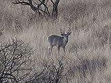 Sonoran Wildlife Wonderland