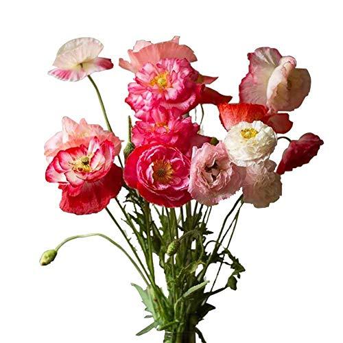 Semi di fiori selvatici colorati 50+ semi biologici facili da coltivare per la piantagione di giardini domestici di bonsai