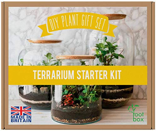 [CLEARANCE] RootBox™ Large Plant Terrarium Kit in scented giftbox   Suitable for Succulents, Bonsai, Fittonia, Cactus   DIY GIFT for easter anniversaries birthdays employee/leaving work & lockdown