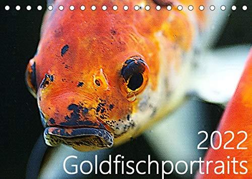 Goldfischportraits (Tischkalender 2022 DIN A5 quer)